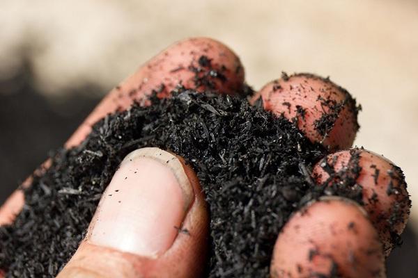 mua giá thể trồng rau thủy canh