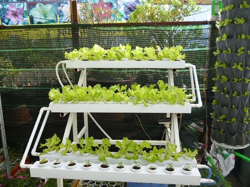 chi phí trồng rau thủy canh hồi lưu
