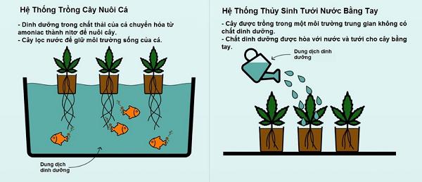 mô hình trồng rau thủy canh