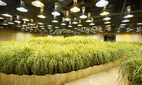 đèn led trồng rau thủy canh
