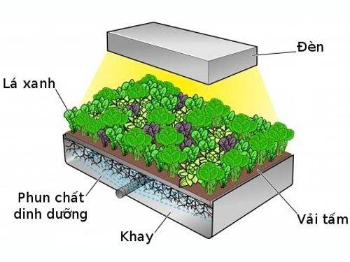 mô hình trồng rau khí canh có ưu điểm gì