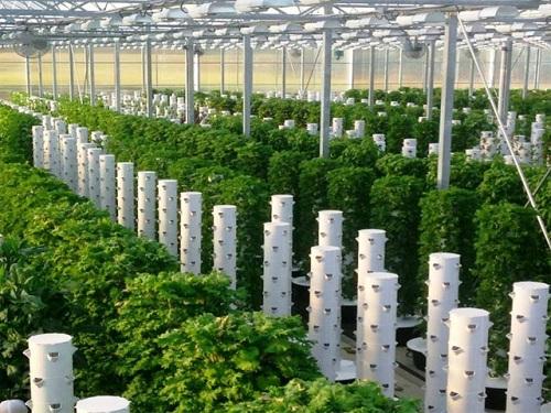 trồng rau khí canh trụ đứng
