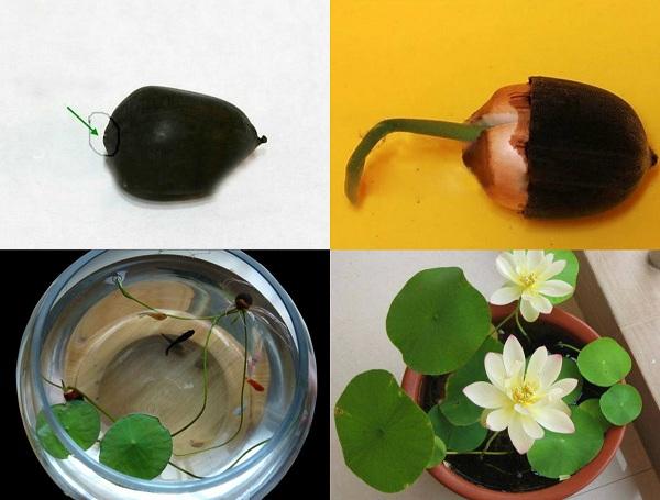 trồng rau sạch thủy canh