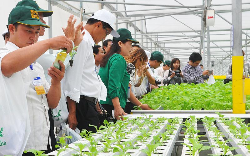 trang trại trồng rau thủy canh