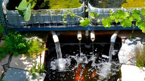 trồng rau thủy canh aquaponics